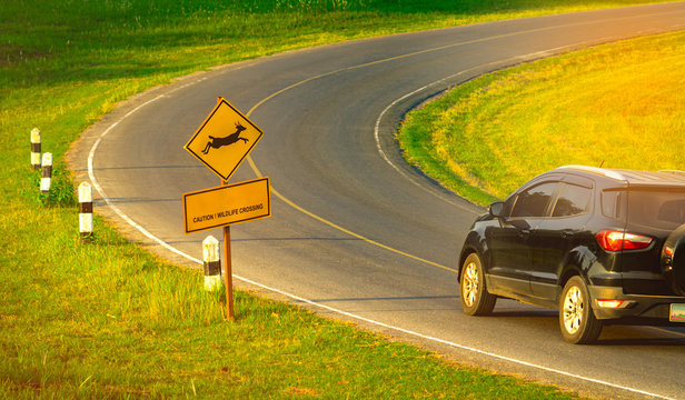 """Black SUV car of the tourist driving with caution during travel at curve asphalt road near yellow traffic sign with deer jumping inside the sign and have message """"caution wildlife crossing"""""""