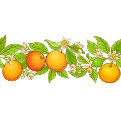 grapefruit branch vector pattern