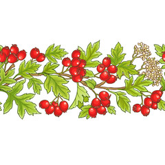 hawthorn branch vector pattern