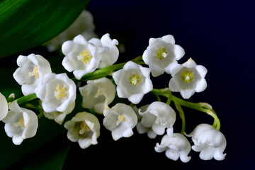 スズランの花
