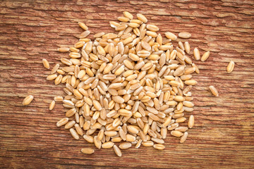 hard red winter wheat grain background