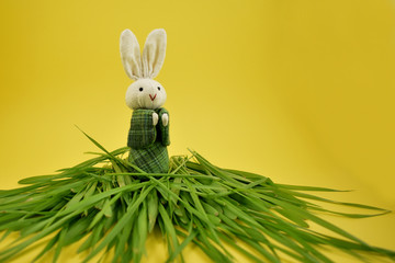 Bunny in the grass stock images. White rabbit on a yellow background. Spring grass with Easter bunny. Easter decoration on a yellow background. Spring decoration images