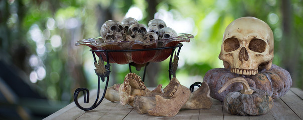 Skull on the withered pumpkin and little skulls in the glass tray wich had bones on old wooden table in the graveyard