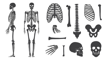 skeleton collection