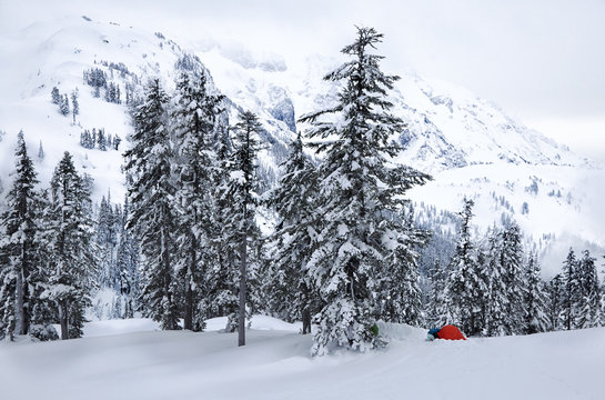 Snow covered trees in forest with camp tent in winter