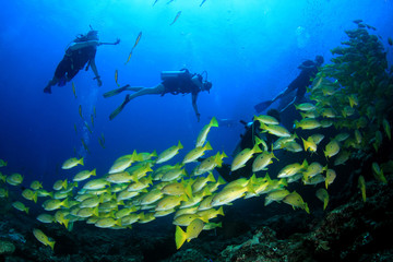 Scuba dive on coral reef underwater