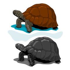 Illustration of Vector Tortoises