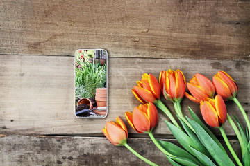Overhead shot of a cell phone with a garden scene and a bouquet of orange and yellow tulips over a wood table. Flat lay top view style.