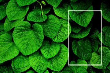 green ivy leaf - background