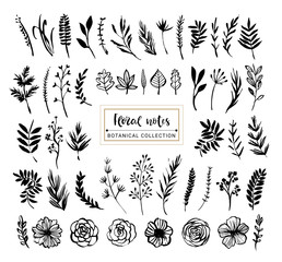 Floral notes botanical collection. Flowers, branches, and leaves. Hand drawn design elements. Nature vector illustration.