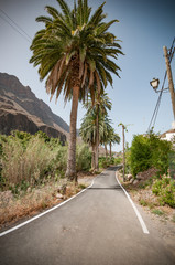 Gran Canaria a spanish island in europe spain a famous vacation with colorful landscapes for travel in spain. From the desert to beautiful oases with palms, cacti and aloe vera. road with palms
