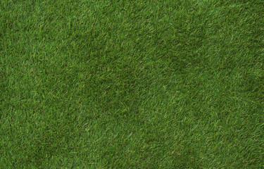 green fresh summer grass, background, texture