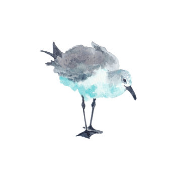 Watercolor illustration of seagull bird looking down