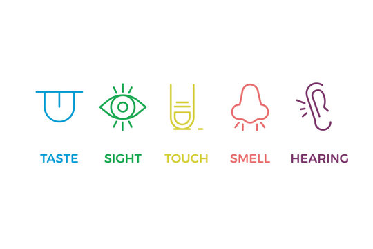 5 human senses illustrations. Taste, sight, touch, smell, hearing. Tongue, eye, finger, nose and ear. Vector trendy thin line icon pictogram designs in different colors