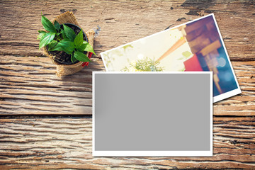 Green plant on wooden table with photos