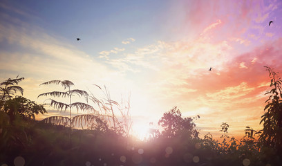 Birds flying on meadow sunrise background