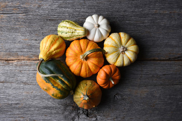Closeup shot of a group of decorative Pumpkins, Squash and Gourds
