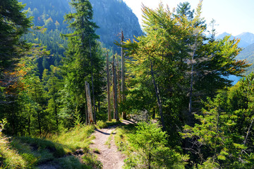 Fototapete - Hiking trail around famous Neuschwanstein Castle on a rugged hill above the village of Hohenschwangau near Fussen in southwest Bavaria