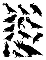 Cockatoo birds animal detail silhouette.Vector, illustration. Good use for symbol, logo, web icon, mascot, sign, or any design you want.
