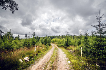 Road entrance to a forest with pine trees