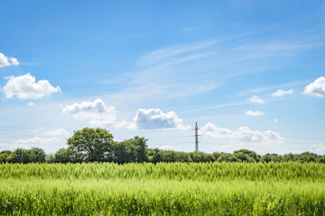 Pylons on a green field with crops