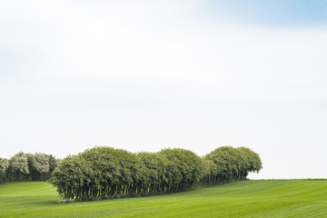 Crops on a field with trees on a row