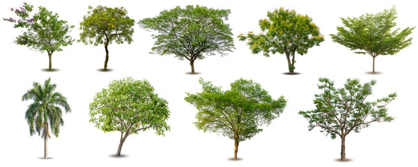 Collection of Isolated Trees on white background .