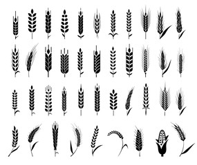 Ears of wheat bread symbols.