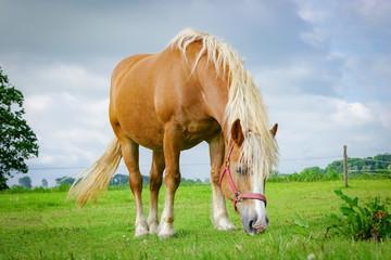 Braunes Pferd weidet in auf einer Wiese