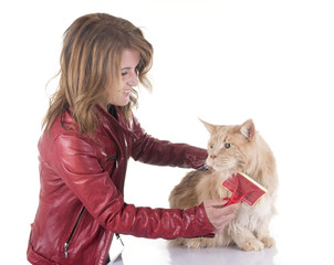 Fototapete - maine coon cat brushing