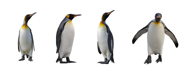 Keuken foto achterwand Antarctica King penguins isolated on white background