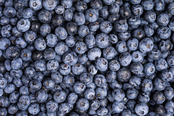 Fresh blueberry background. Summer berries. Texture blueberry top view