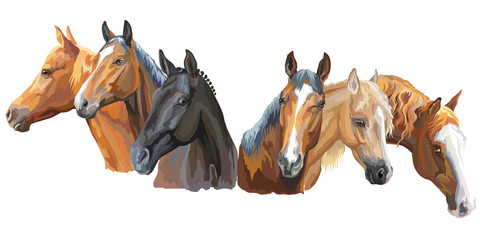 Set of horses breeds2