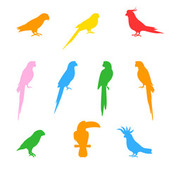 Silhouettes of birds and parrots.