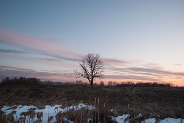 lonely tree in the field, silhouette at sunset,