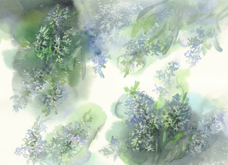 white hyacinth watercolor background