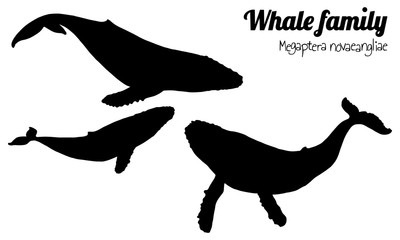 The family of humpback whales with their calf. Megaptera novaeangliae. Vector. Silhouette.