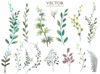 Vector Big Set watercolor elements - wildflowers, herbs, leaf. collection garden and wild foliage, flowers, branches.  illustration isolated on white background, eucalyptus, exotic, tropical leaf.