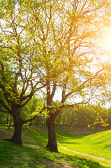 Spring landscape. Green park trees and sunset light shining through the branches
