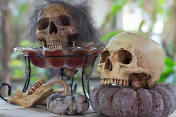 Skull on the withered pumpkin and skull wich has hair line in the glass tray wich had bone on wooden table in the graveyard