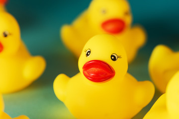 Yellow rubber duck toys