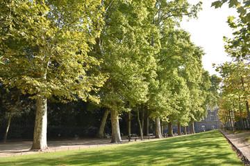 Allée de platanes au jardin du Luxembourg à Paris, France