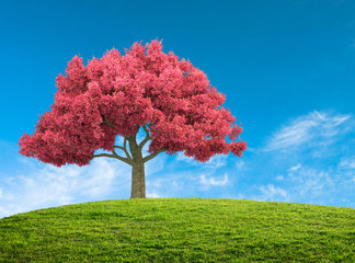 spring landscape with pink blossom tree