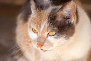 close-up cat head