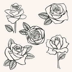 rose, flower, set, hand-drawing vector illustration sketch