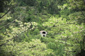 Stone shelter house deep in the Tarn gorge forest
