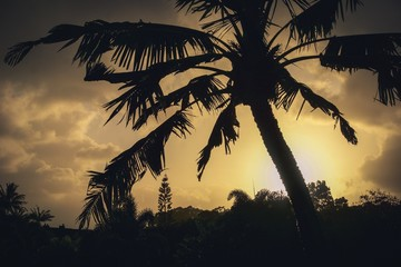 palm tree silhouette against yellow sunset