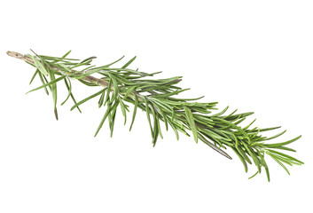 Branch of rosemary, white background