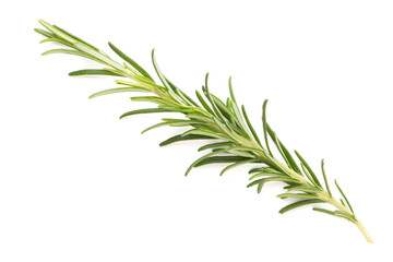 Rosemary spice on the white background.