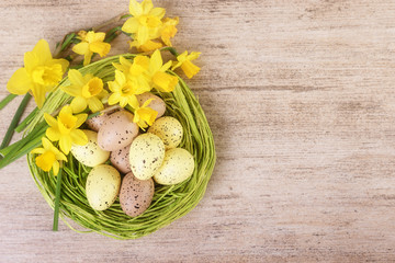 Bright daffodil flowers with straw nest filled with colourful pastel Easter Eggs. Top view, text space.